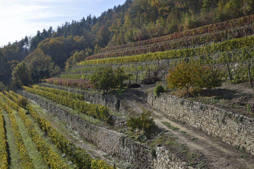 Casa Vacanze Fusina - (Dogliani) - Terrazzamenti della Valle Bormida
